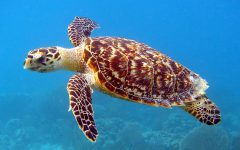 Sea a Turtle? Go Help It