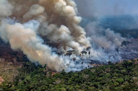 Environmental Update: The Amazon Rain Forest Fires