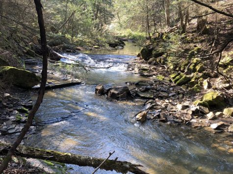 A beautiful hike I went on last week near Buffalo Creek.
